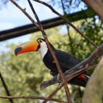 Parque das Aves (Foz do Iguaçu)