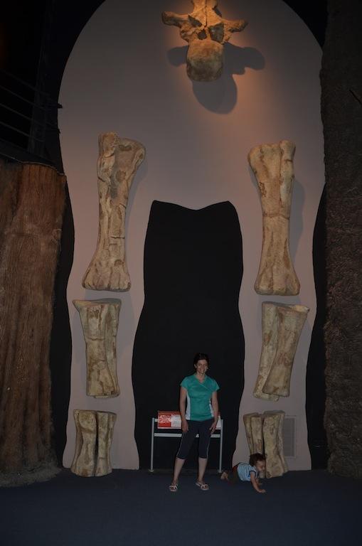Argentinosaurus: peso estimado entre 80 e 100 toneladas (é considerado o mais pesado dos seres vivos), 35 metros de comprimento, altura entre 10 e 12 metros e 95 milhões de anos.