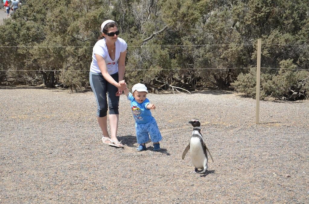 Olha mãe, um pinguim!