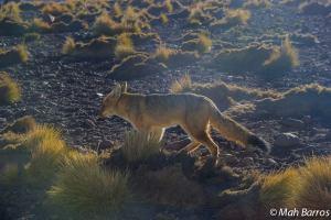 Fauna do Deserto