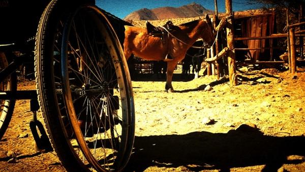 silla de ruedas sobre un caballo